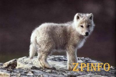 В Запорожье зоопарк ДЖД пополнили двумя волчатами