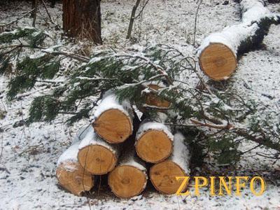 В Запорожском районе поймали черных лесорубов