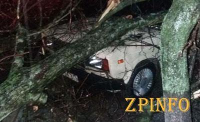 В Запорожской области дерево упало на авто