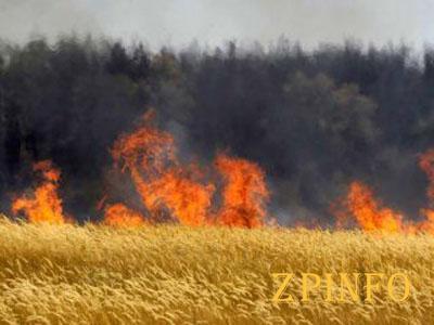 В Запорожской области горело поле
