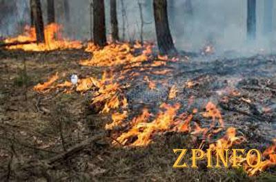 В Запорожской области горел лес