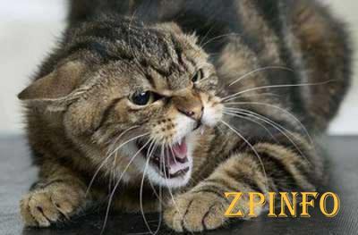 В Запорожской области кот напал на женщину