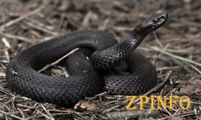 В Запорожской области мужчину укусила змея