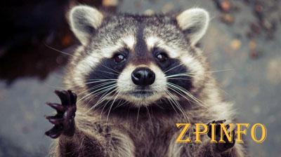 В Запорожской области объявили в розыск 11 енотов