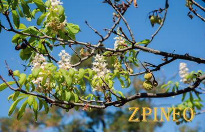 В Запорожской области опять весна