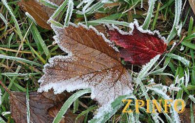 В Запорожской области ожидаются заморозки