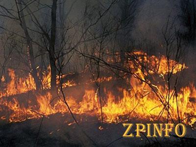В Запорожской области произошло почти 100 пожаров