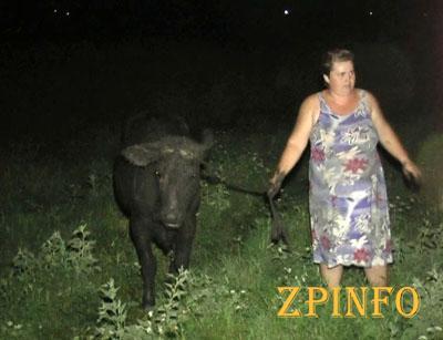 В Запорожской области спасатели вытаскивали корову из ямы