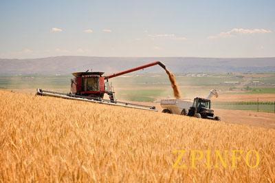 В Запорожской области уже собрали тонны зерна