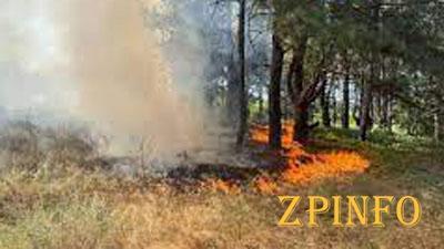 В Запорожской области выгорело шесть гектаров