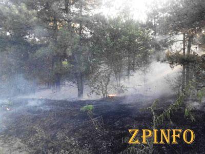 В Запорожской области загорелся лес