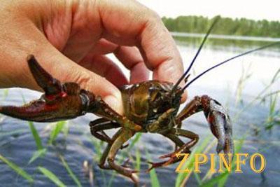 В Запорожской области запретят ловлю раков