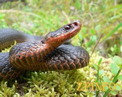 В Запорожской области женщину укусила змея