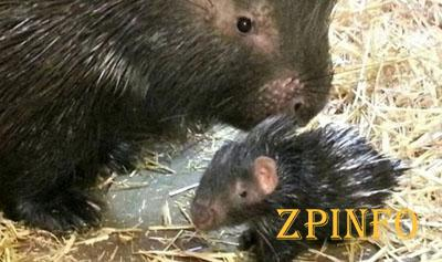 В зоопарке Запорожской области родились малыши