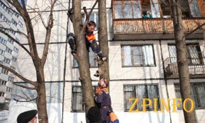 Запорожец застрял на дереве