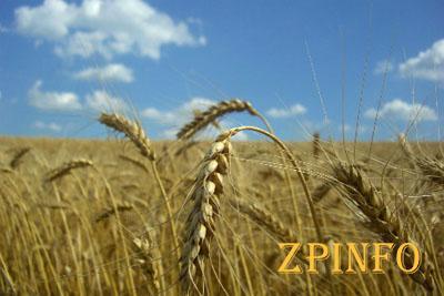 Запорожские аграрии собрали более 2,5 млн. тонн зерна