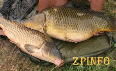 Запорожские браконьеры поймали 500 кг рыбы