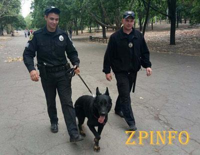 Запорожские улицы патрулируют полицейские с собаками