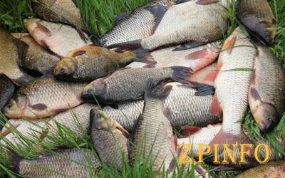 Запорожский рыбоохранный патруль задержал браконьера