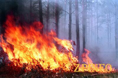 Запорожцев предупреждают о лесных пожарах