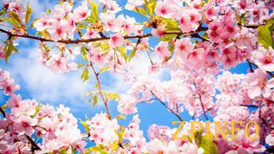 Запорожцев в мае ожидает много выходных
