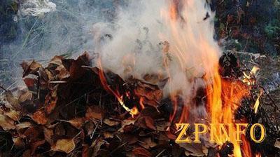 Запорожцев за сжигание опавшей листвы грозит крупный штраф