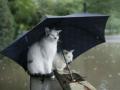 На Запорожье надвигается похолодание с дождями