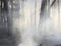 В Запорожской области дважды горели леса